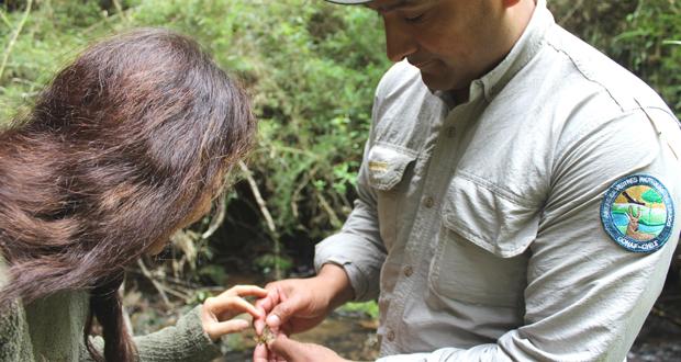Guardaparques de la Reserva Nacional Nonguén encontraron este crustáceo en tres esteros que atraviesan el área silvestre.