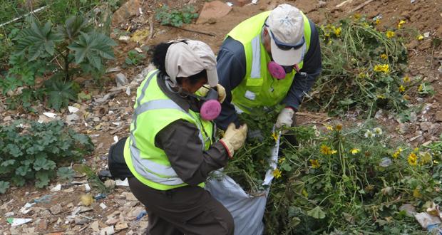 Entre los años 2015 y 2016 se ha retirado 1.072 toneladas de basura desde los cerros de Valparaíso.