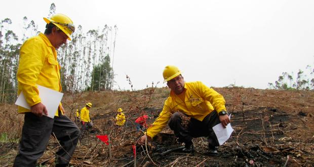 """La jornada de práctica se realizó en el predio """"El Descabezado Dos"""", de Forestal Arauco, ubicado en Curanilahue."""