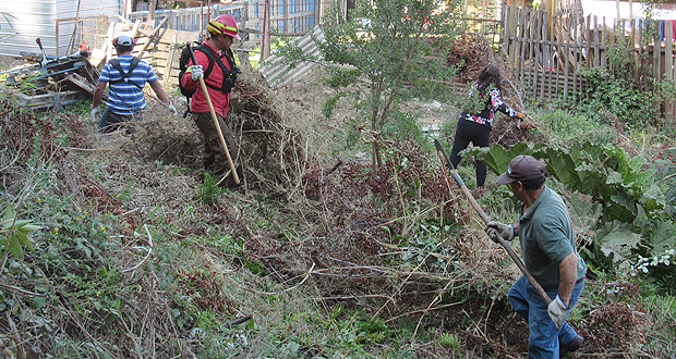 El trabajo en terreno se desarrolló con el apoyo de brigadistas de CONAF, Bomberos y personal de la Municipalidad de Concepción.