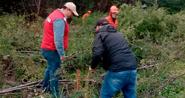 La tarea fue parte de la labor de prevención y trabajo en terreno que efectúa CONAF en la ciudad.